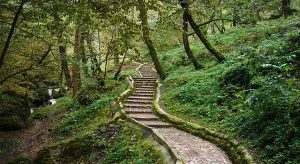 masoleh-masuleh / forest park
