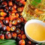 date-seed-oil-iranguidance