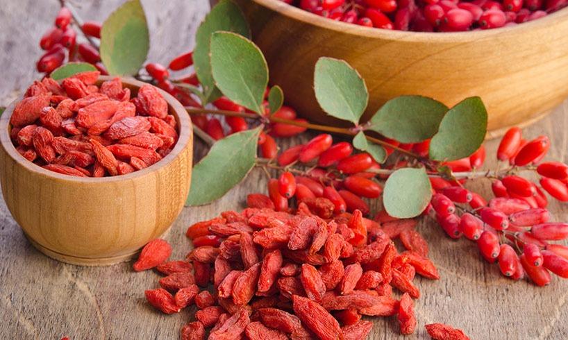 iranian-barberry-iranguidance