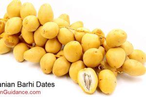 iranian-barhi-dates